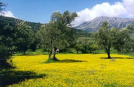 Die blühende Ebene von Vassiliki